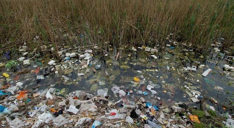 رهاسازی زباله در طبیعت
