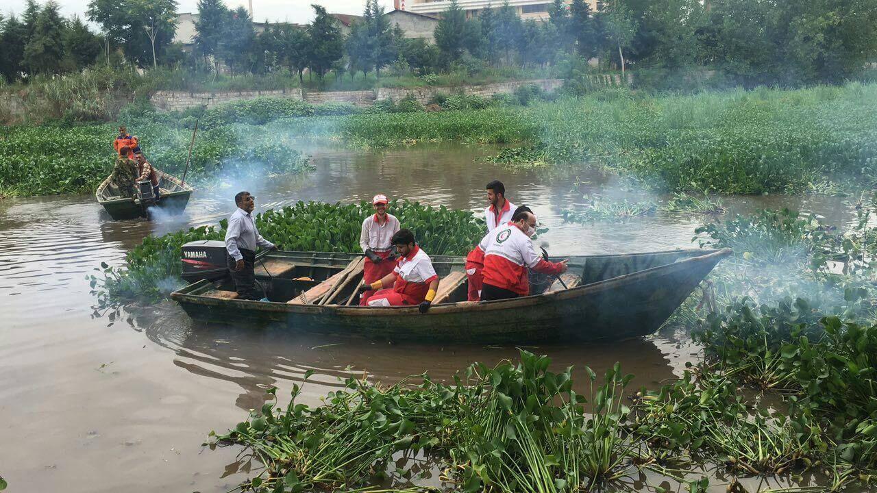 پاکسازی تالاب از سنبل آبی توسط مردم