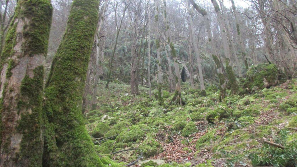 جنگل غار دانیال