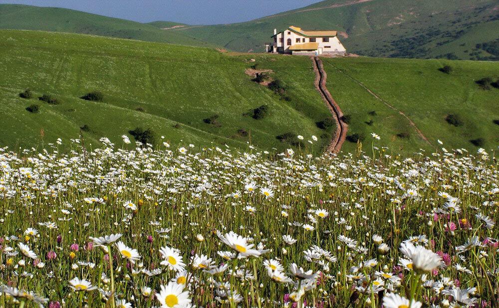 جنگل فندقلو در اردبیل، جشنواره گلهای بابونه و فاصله تا گردنه حیران