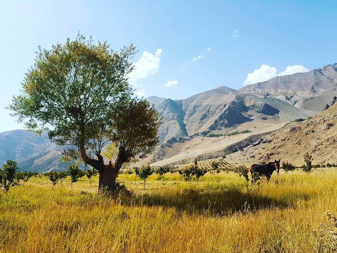 دشت هویج روستای افجه، جایی مناسب برای کمپ زدن در اطراف تهران