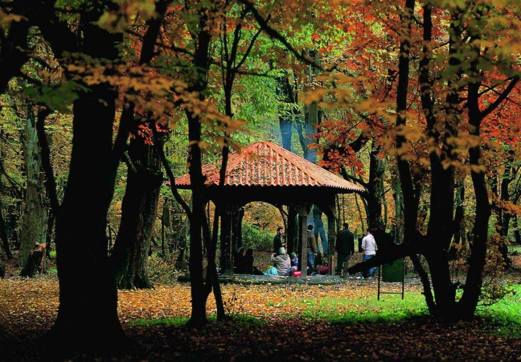نمایی از پیکنیک در پارک جنگلی ناهارخوران گرگان