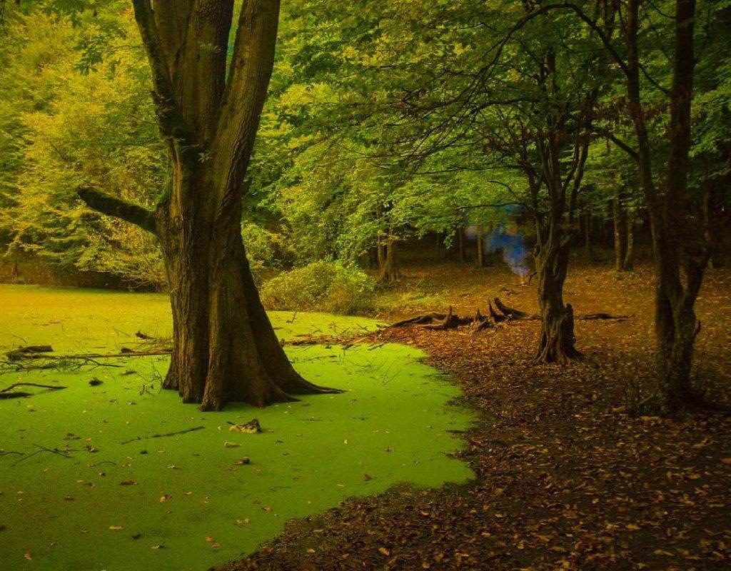 رنگ سبز مرداب؛ مانند بوم نقاشی