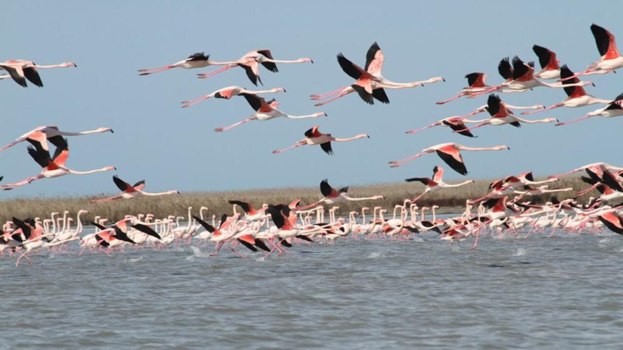 مهاجرت پرندگان به تالاب کانی برازان