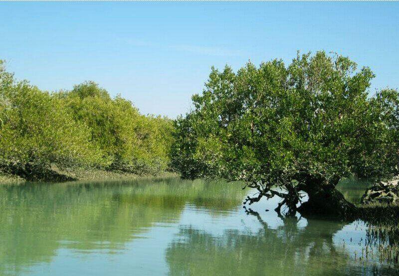جنگل هرا جزیره قشم
