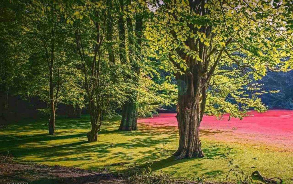 درخت های مرداب هسل چالوس