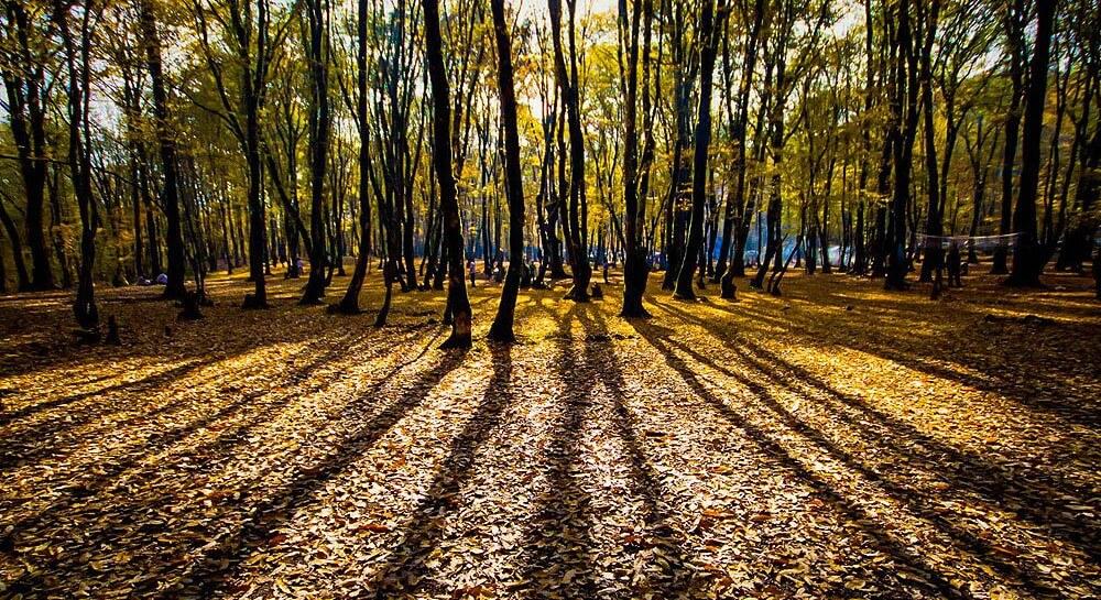 نمایی پارک جنگلی النگدره