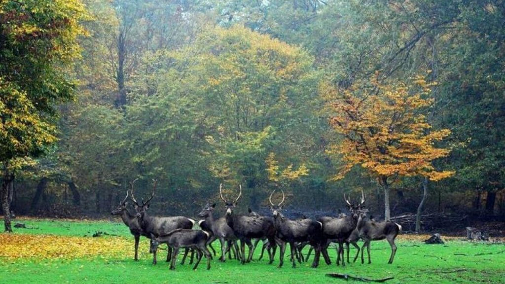 پارک جنگلی قرق در گرگان