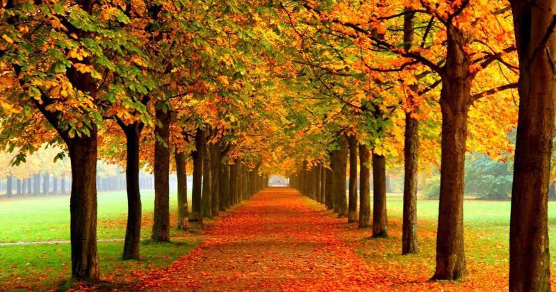 پارک جنگلی النگدره در پاییز