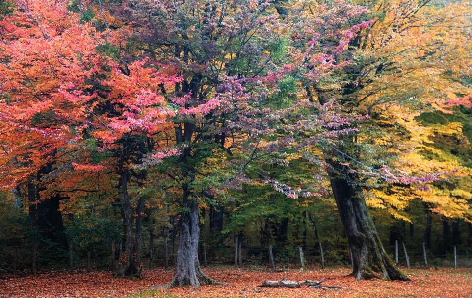 پارک جنگلی النگدره کجاست؟ طبیعتگردی آسان در دل جنگلهای گلستان