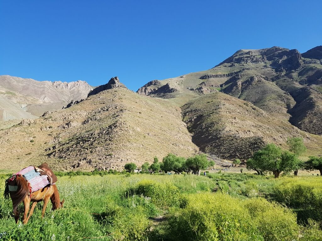 دشت هویج ؛ سفری یک روزه به ییلاقی خوشآب و هوا در اطراف تهران