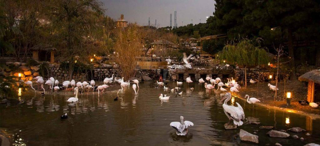 پرندههای آبزی