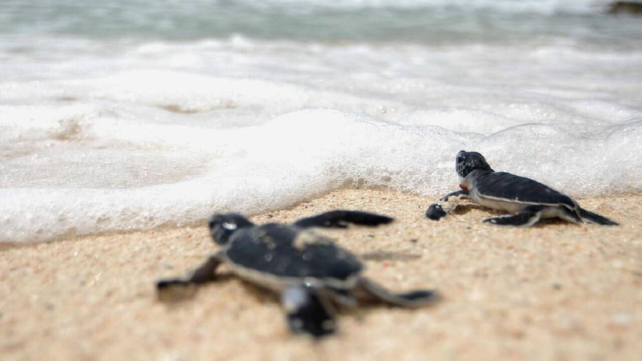 ساحل لاک پشت ها چابهار