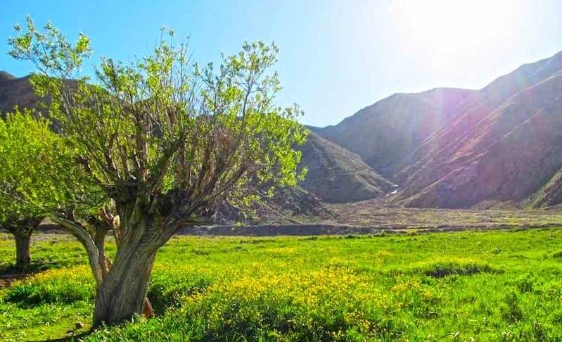 دشت هویج در روستای افجه